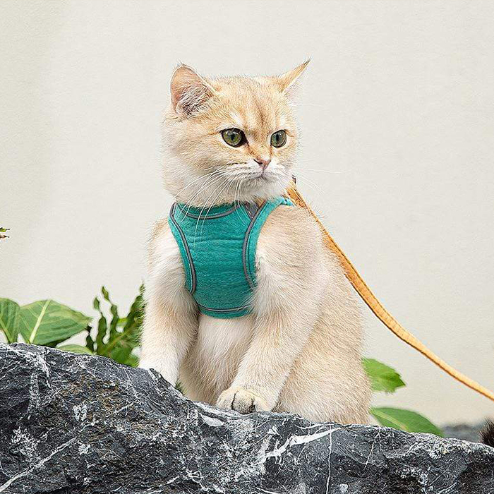 Za sigurnost vaše mačke image